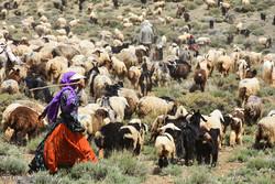۳۵ میلیون هکتار از مراتع کشور در اختیار عشایر است