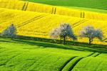 توانایی اشتغالزایی ۱۰ هزار نفر در حوزه کشاورزی جهرم