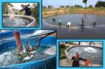 ظرفیت آبزیپروری شازند نیازمند حمایت است/توان تولید سالانه ۱۹هزارتن ماهی