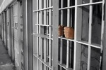 زندان مرکزی بندرعباس به جاده بندرعباس به میناب منتقل می شود