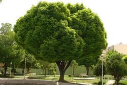 درخت فضای سبز