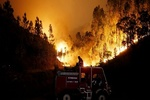 Iran condoles deaths in Portugal wildfire