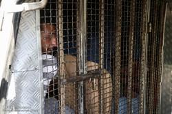 زورگیر غرب تهران در لحظه سرقت دستگیر شد