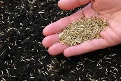 تولید بذرهای هیبریدی به روش اصلاح معکوس کلید خورد