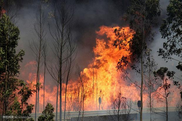 Portekiz'deki orman yangınından kareler