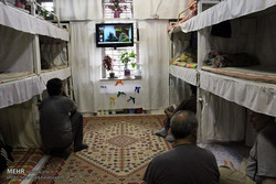 گرانی تخم مرغ باعث مشکلاتی در وعده غذایی زندانیان شده است