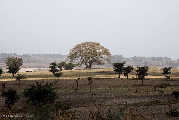 نگاهی به جشن شکرگزاری ایریچا در میان مسلمانان اتیوپی