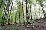 ابلاغ مصوبه دولت در رابطه باجرائم مرتبط با قانون حفاظت از جنگلها