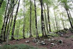 جنگل - کراپشده