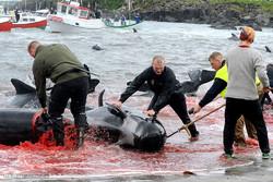 قتل عام نهنگ ها
