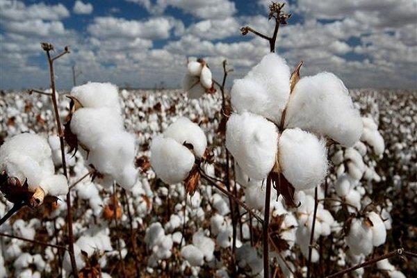 خرید توافقی ۴۵۸ تن از محصولات کشاورزان خراسان جنوبی