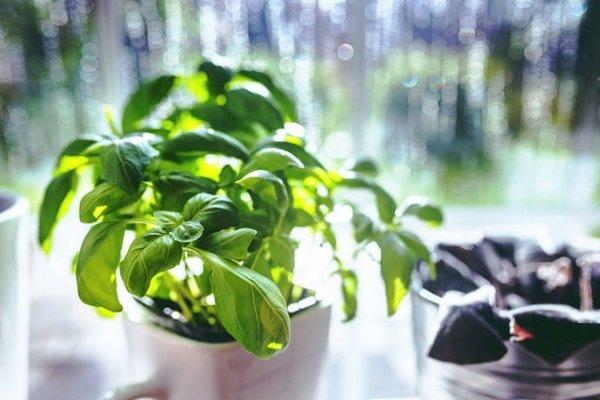 گیاهان موجب افزایش کیفیت هوای منزل نمی شوند