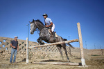 Horse jumping race in Hamedan