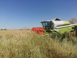 خرید تضمینی دانه های روغنی در مازندران آغاز شد