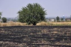آتش سوزی مزارع