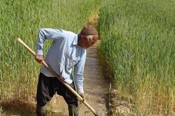 بیمه کشاورزان