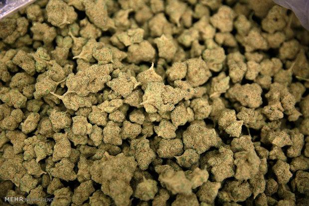 کشف بیش از یکصد کیلوگرم ماده مخدر ماری جوانا در فراهان