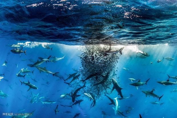 برندگان مسابقه عکاسی جهان طبیعت