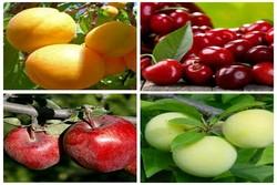 صادرات ۷۵هزار تن محصولات کشاورزی از آذربایجان غربی