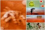 روایتی از واقعیت تا شایعه؛ خونِ دلِ دریاچه ارومیه به رخسار نشست
