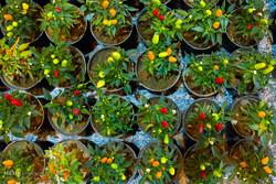 آیا گیاهان آپارتمانی هوای خانه را تصفیه میکنند؟
