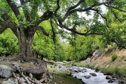 طبیعت گردی کرمان