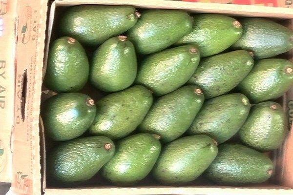 ۵.۷ تن میوه قاچاق در خراسان جنوبی امحا شد