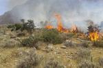آتش سوزی در ارتفاعات قلاجه / حریق در حال گسترش است