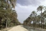 طرح آبیاری قطرهای در نخلستانهای استان بوشهر اجرایی میشود
