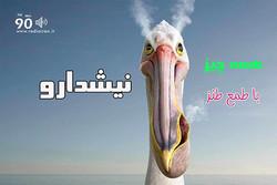 «نیشدارو» رادیو ایران با طنزپردازان