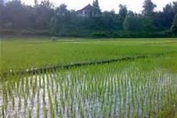 افزایش بهره وری اراضی کشاورزی با اجرای طرح تجهیز و نوسازی