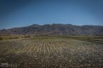 بیآبی به دشت «سیلاخور» رسید/ مزارع در خشکسالی آببازی میکنند