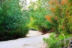 جنگل گلوبردکان جم