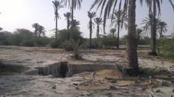 تراژدی غم بار نابودی دشت میناب/بازدیدهای بی نتیجه وزرا ادامه دارد