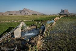 افزایش برداشت آب زیرزمینی ثمره مزیت صادراتی محصولات کشاورزی