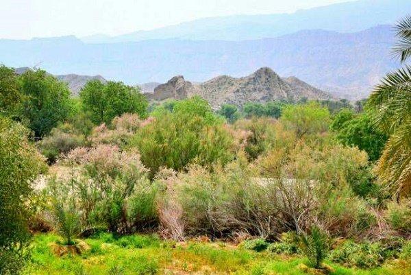 تصرف غیرقانونی جنگل گلوبردکان در شهرستان جم/ محیط زیست شکایت کرد