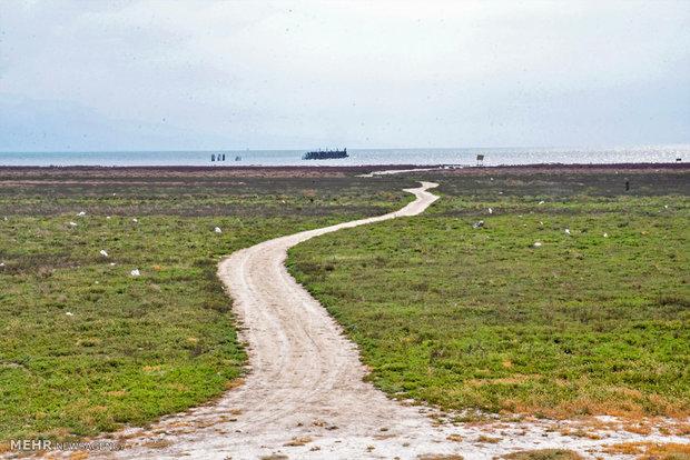 تصاویر/ وضعیت بحرانی خلیج گرگان