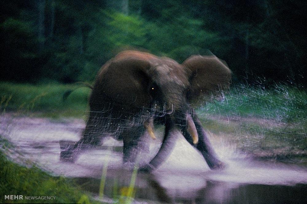 موجودات در معرض انقراض