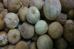 کشف ۱۱۰۰ کیلوگرم لیمو عمانی قاچاق در همدان