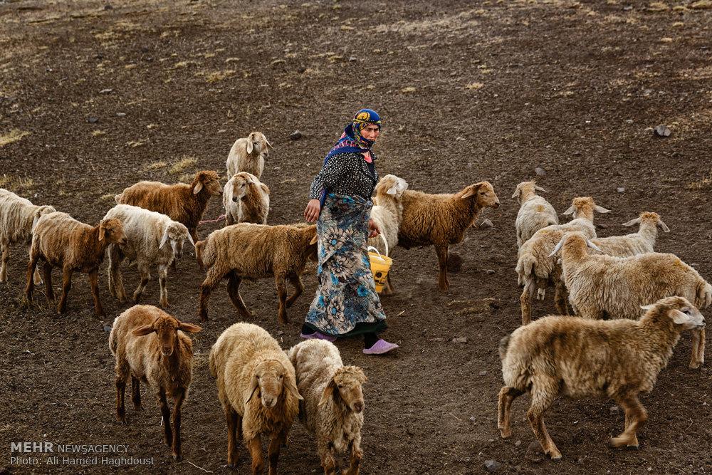 زندگی عشایر مغان در دامنه سبلان