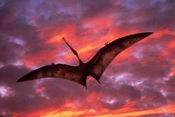دایناسور پرنده - کراپشده