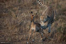 Iran's wildlife species