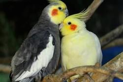 ۱۹۰ قطعه عروس هلندی و طوطی برزیلی قاچاق در یزد کشف شد