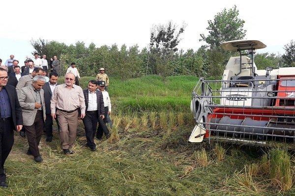 واردات برنج تا پایان زمان برداشت و توزیع محصول داخلی متوقف می شود