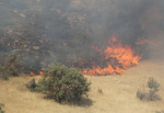 جنگل های «دلا» در «اندیکا» آتش گرفت