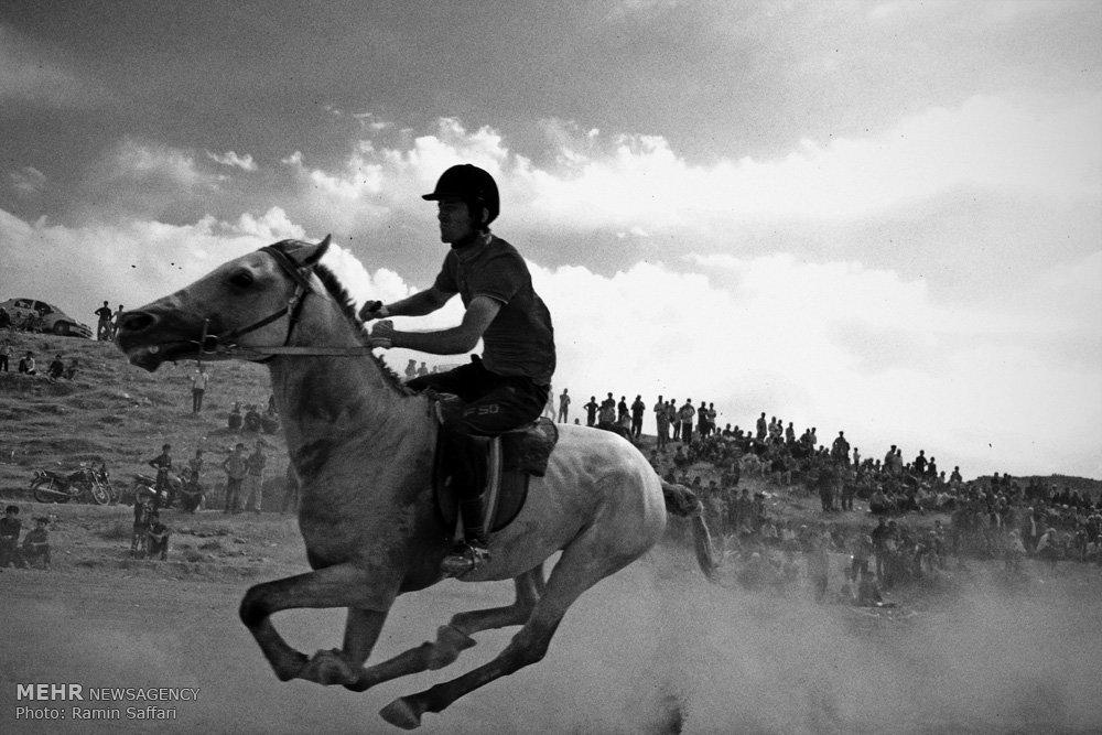 من عاشق اسبم و اسب عاشق دویدن