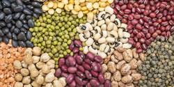 Legume output up by 37%
