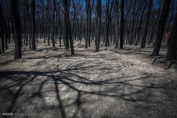 آتش سوزی در کشورهای جنوب اروپا
