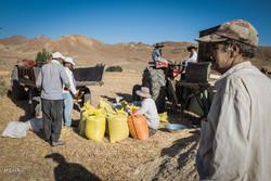 مطالبات گندمکاران استان همدان تا پایان آبان ماه تسویه می شود