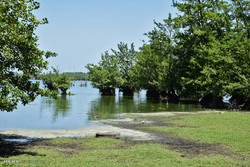 کاهش شدید سطح آب تالاب استیل آستارا
